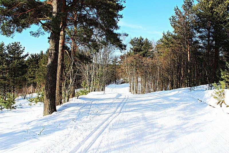 冬天 滑雪足迹在Toksovo 库存图片