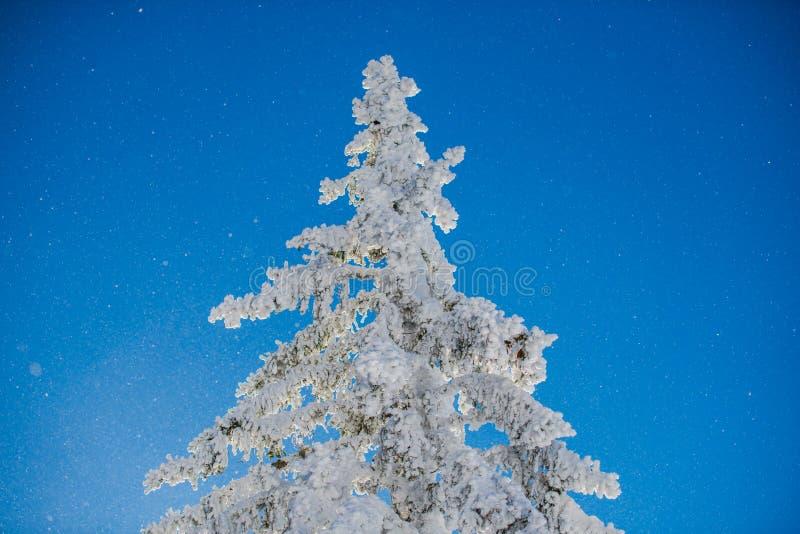 冬天滑雪 免版税库存图片