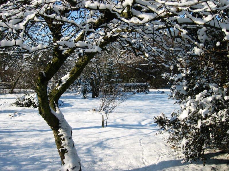 Download 冬天 库存照片. 图片 包括有 投反对票, 庭院, 冬天, 空白, 冻结, 本质, 工厂, 冷静, 结构树 - 51362