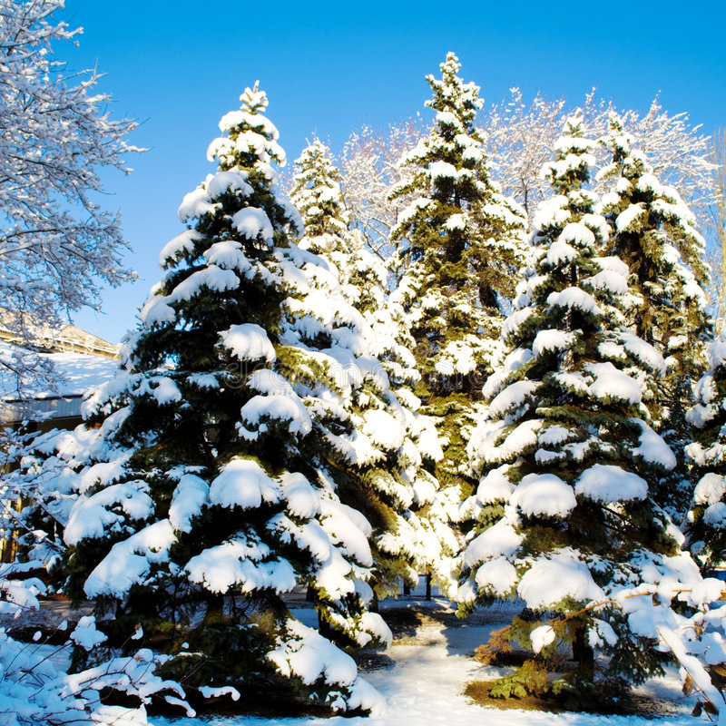 冬天 库存照片