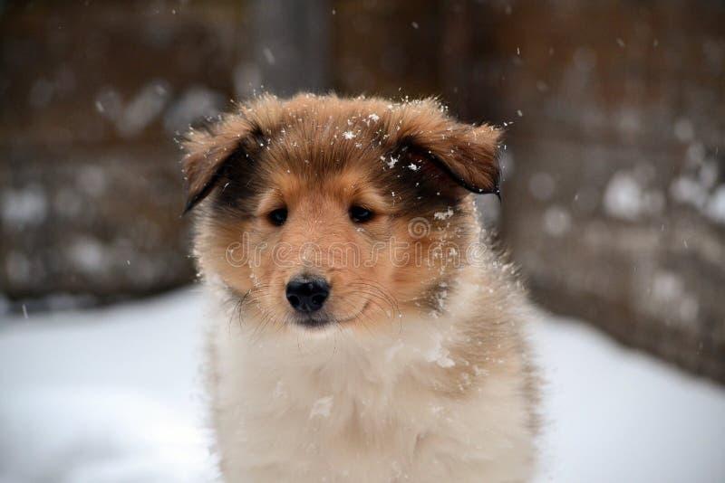 冬天Cora 库存图片