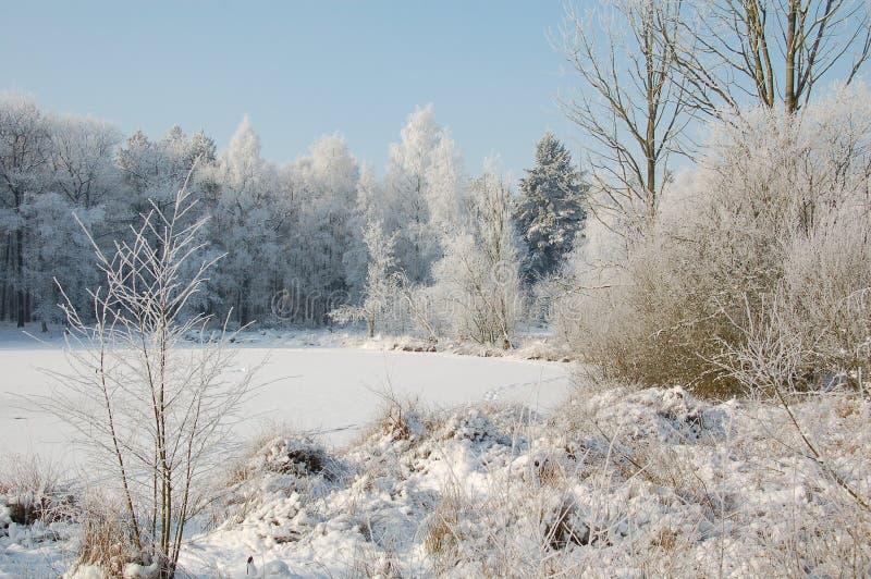 冬天landschap 免版税库存图片