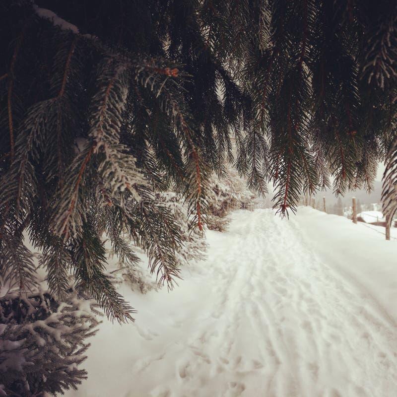 冬天swinter 图库摄影