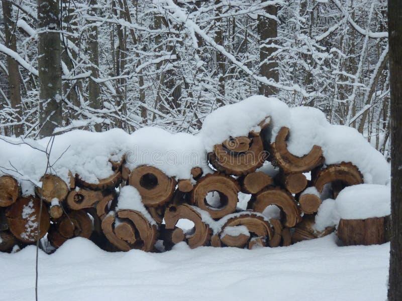 冬季森林中的木桩 图库摄影