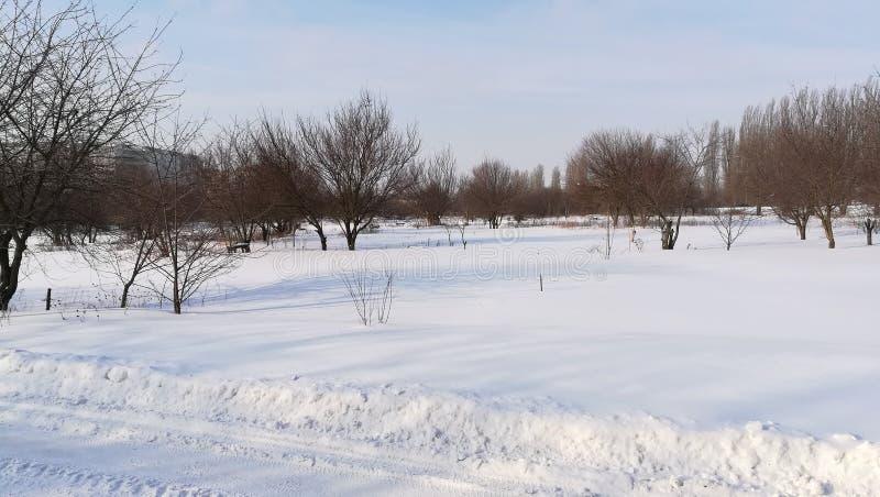 冬景花园开始春天从许多下雪 免版税图库摄影