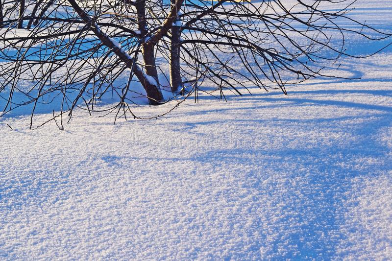 冬景花园,在雪下的樱桃树 免版税库存照片