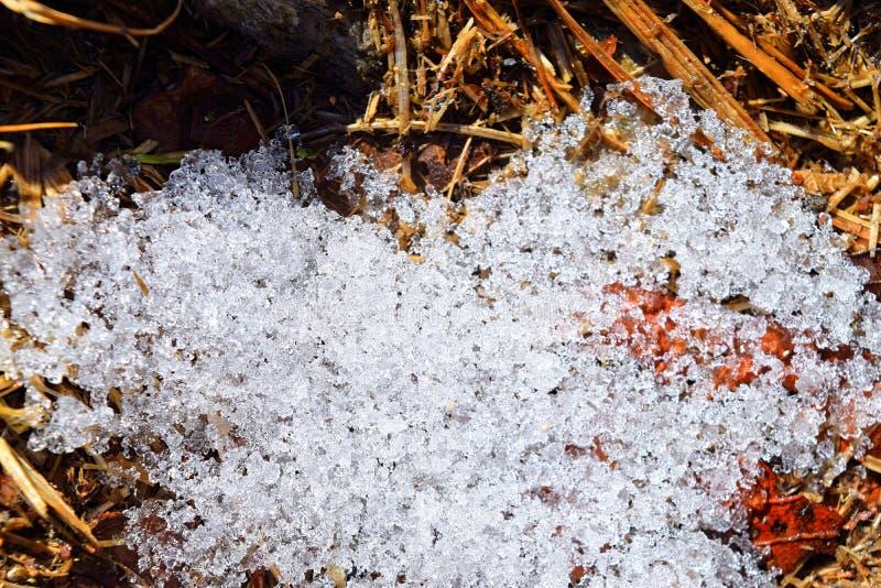 冬降雪积雪透明清白雪不同晶型 免版税库存照片