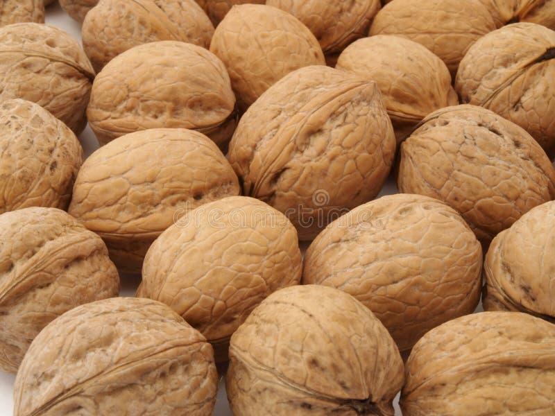 冯walnuts 免版税库存照片