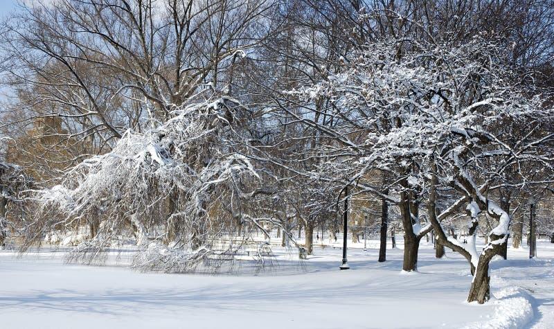 冰冷的公园 库存照片