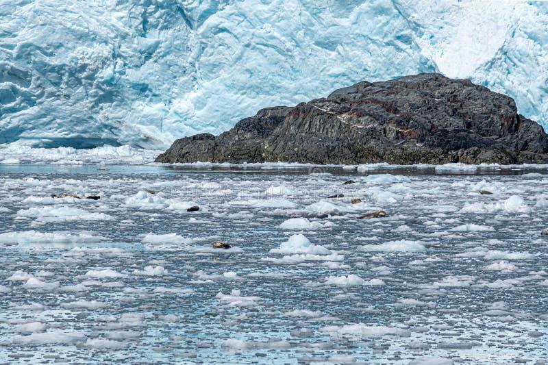 冰原和封印 免版税库存照片