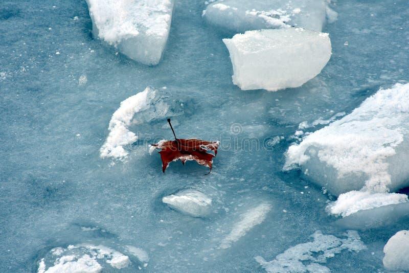 冰和叶子 库存照片