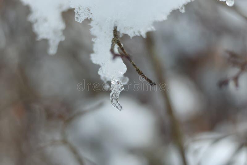 冰和雪在分支 免版税库存照片