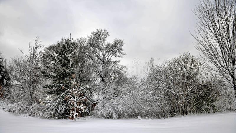 冰和雪被复的树和灌木 免版税库存图片