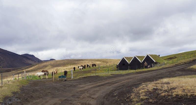 冰岛传统草皮屋顶房子、小组冰岛马和土路的两名农夫工作者在南冰岛 免版税库存照片