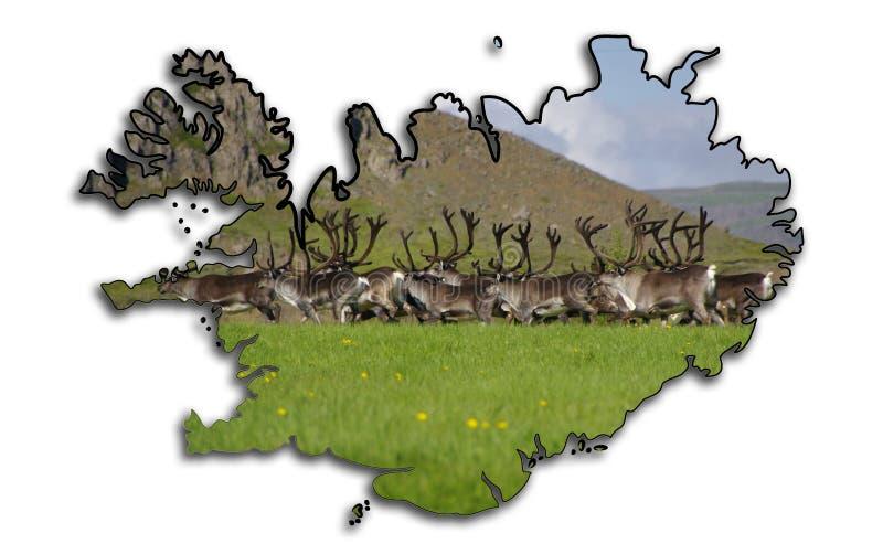 冰岛的映射有驯鹿(驯鹿属tarandus)牧群的 库存图片