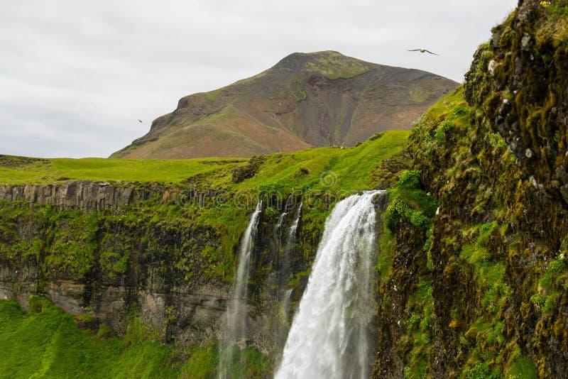 冰岛seljalandsfoss瀑布 免版税图库摄影