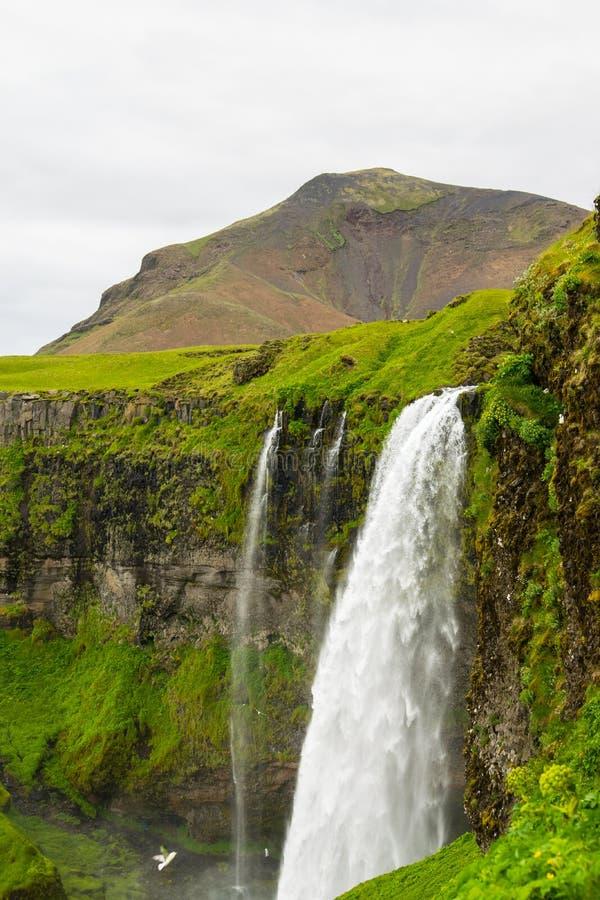 冰岛seljalandsfoss瀑布 图库摄影