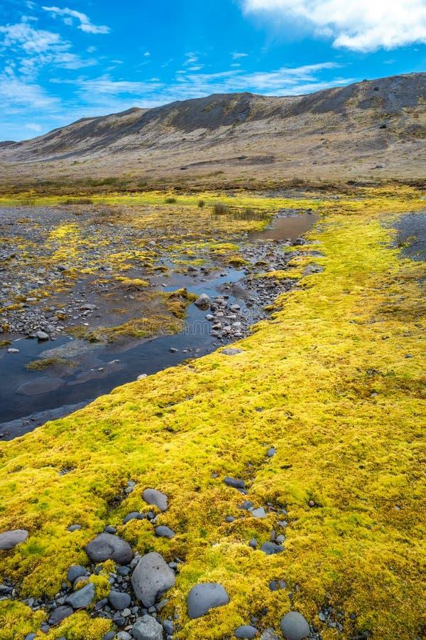 冰川与黄色冰岛青苔,冰河湖,冰岛,夏时的盐水湖岸看法  免版税库存照片