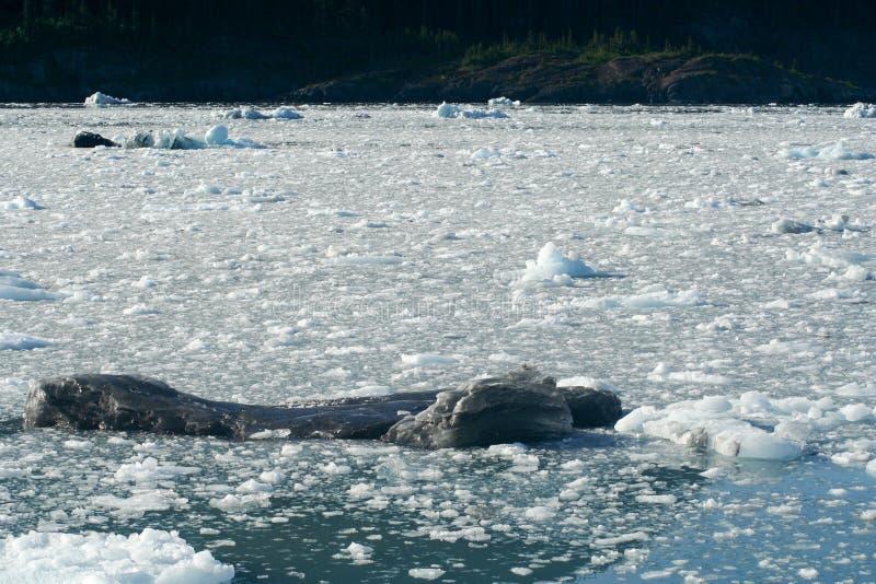 冰川在阿拉斯加 库存图片