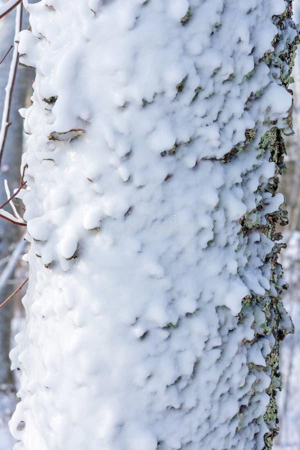 冰川覆盖的树干细节 免版税库存照片
