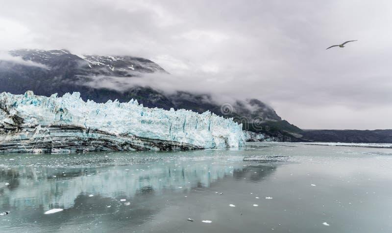 冰川hopkins约翰 海湾覆盖在公园的冰川山国家海洋 库存图片