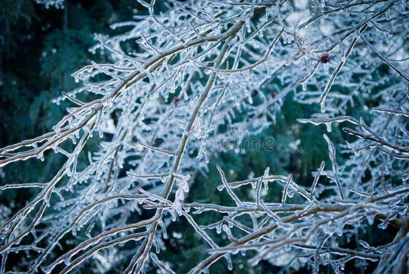 冰暴 图库摄影