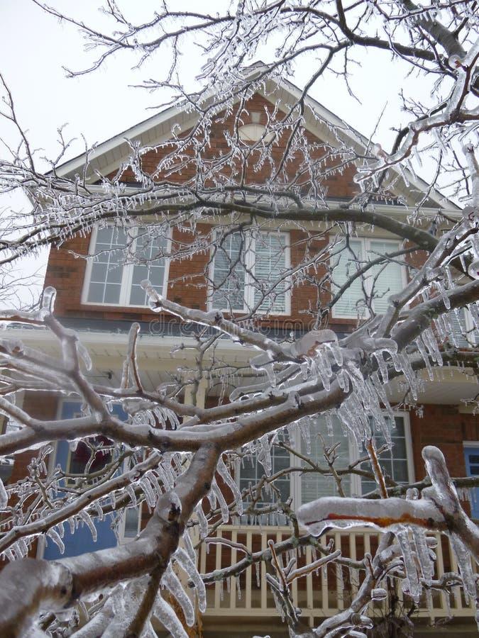 冰树与议院的 库存照片