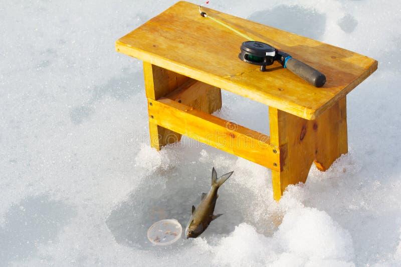冰渔在挪威 三河鳟的壮观的生产 库存图片