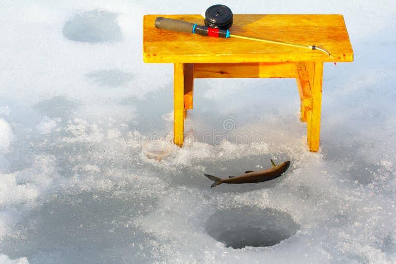 冰渔在挪威 三河鳟的壮观的生产 免版税图库摄影