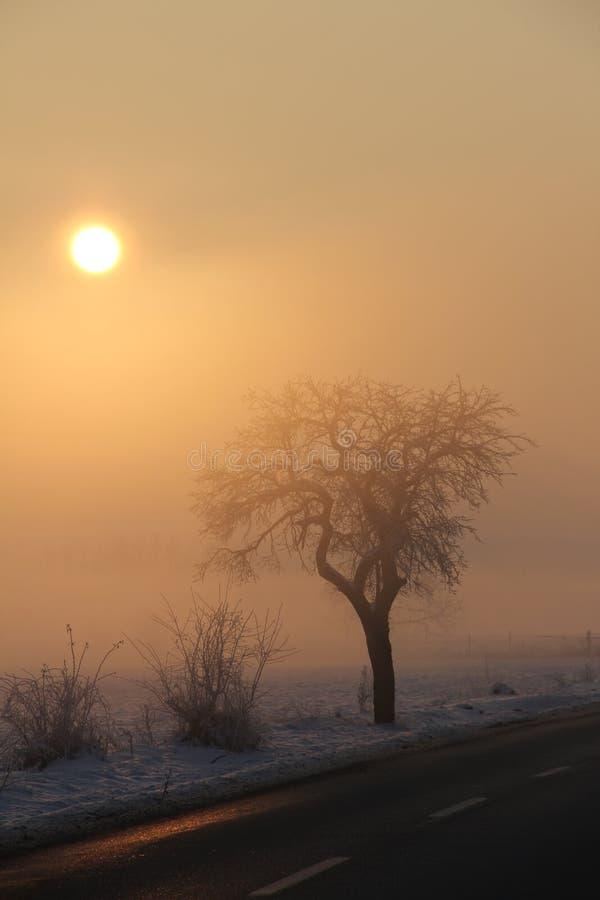结冰的早晨日出 免版税库存照片