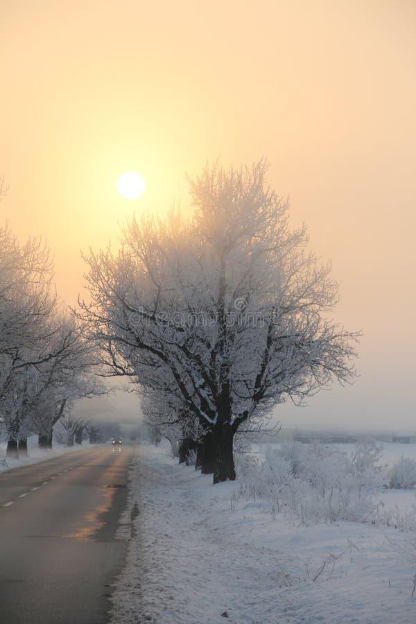 结冰的早晨日出2 库存图片