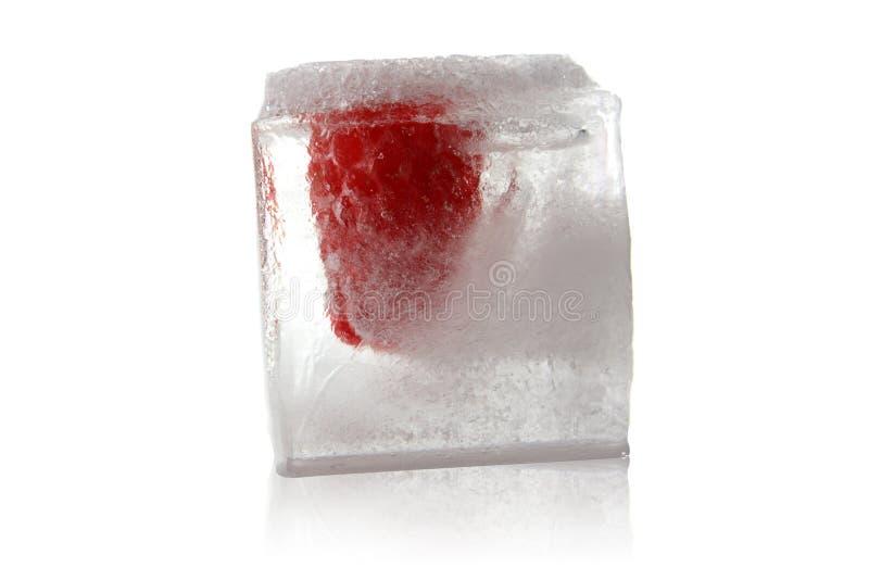 结冰的莓 免版税库存照片