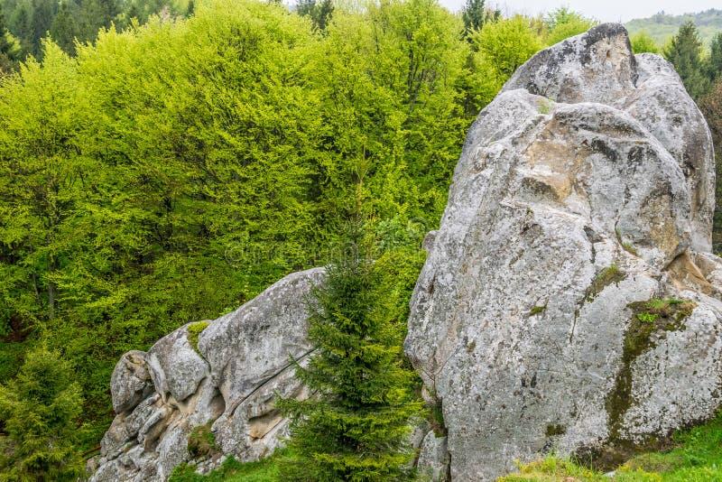 冰砾在森林里 免版税库存图片