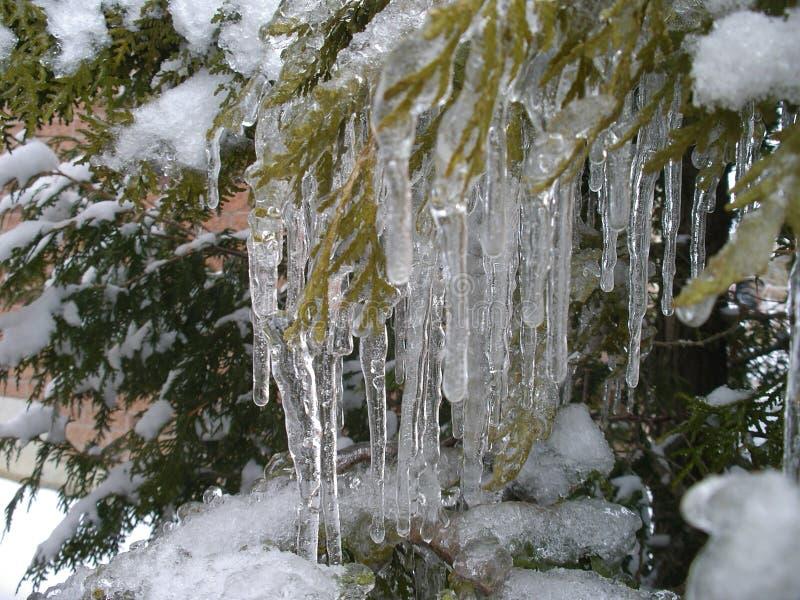 冰秀丽在冻雨以后的 免版税库存照片
