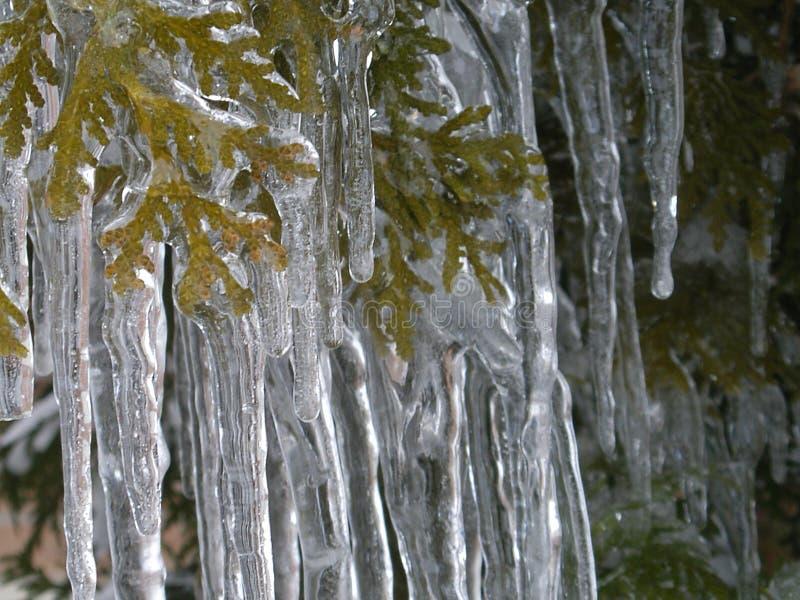 冰秀丽在冻雨以后的 库存照片