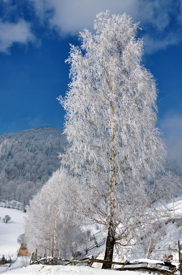 冰罗马尼亚结构树冬天 免版税库存照片