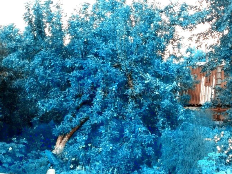 冰苹果树 免版税图库摄影