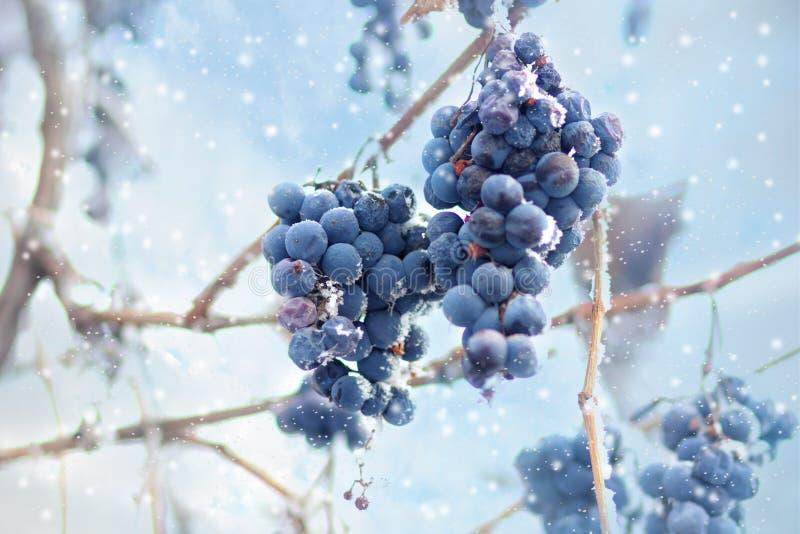 冰酒 冰酒的葡萄酒红葡萄在冬天情况和雪 白色剥落冰盖的结冰的葡萄,醴 免版税库存图片