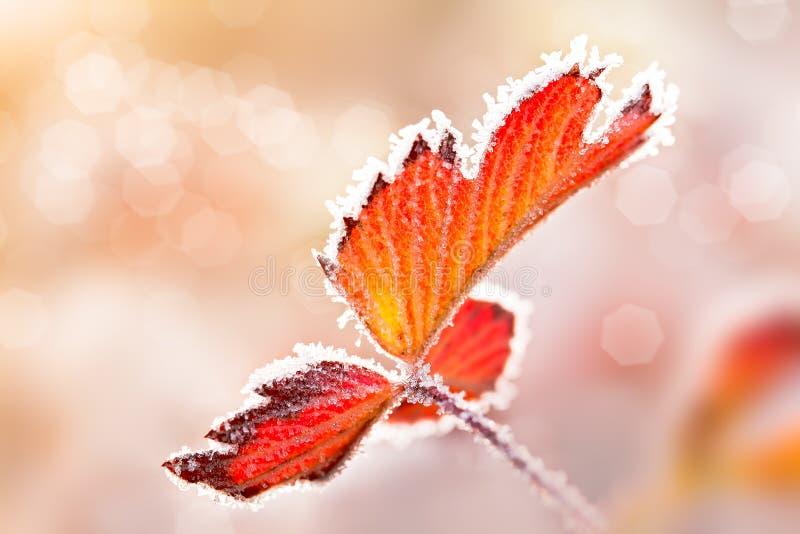 冰鞋带叶子 免版税图库摄影