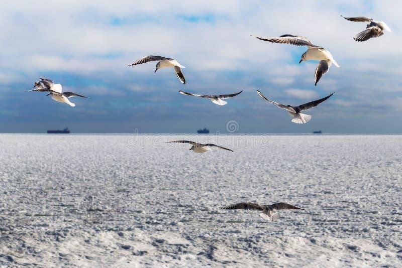 冰结冰的海和海鸥块  库存照片