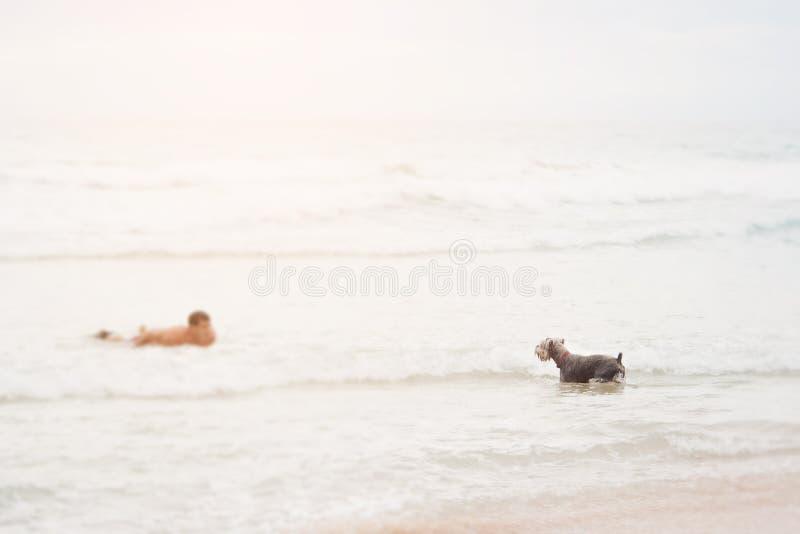 冲浪板的年轻人训练他逗人喜爱的狗的游泳 游泳往彼此的所有者和狗 获得的乐趣概念与p 免版税库存照片