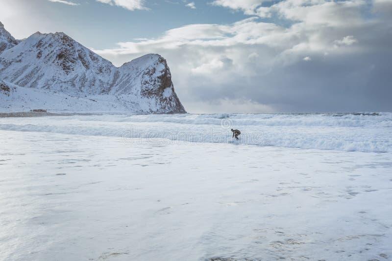 冲浪者在挪威征服在山围拢的一个多雪的海滩的波浪 库存照片