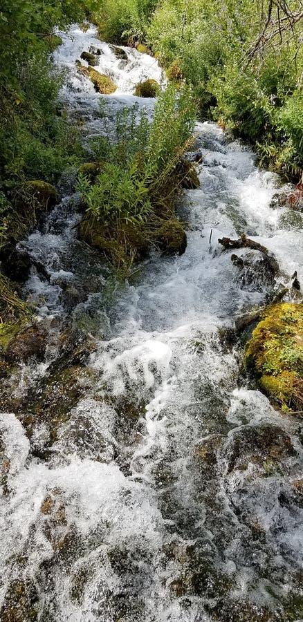 冲的小河翻滚在生苔岩石在犹他的Wasatch山的小瀑布春天 库存照片