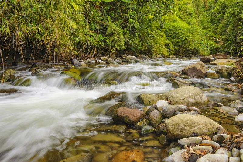 冲的山小河 库存照片