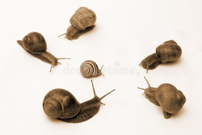 冲突蜗牛 库存照片