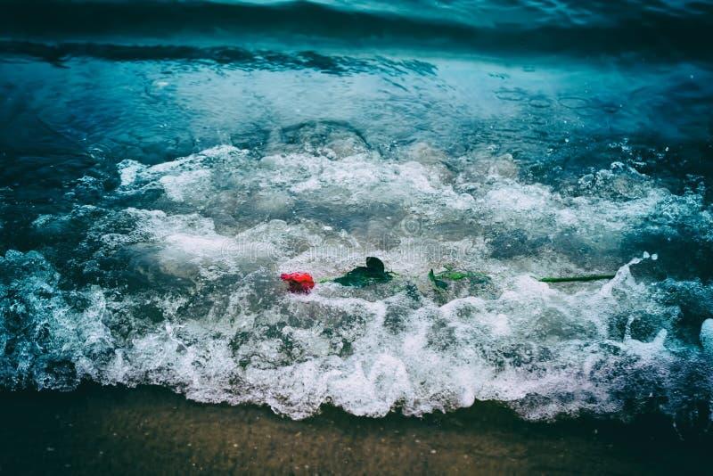 冲走从海滩的波浪一朵红色玫瑰 葡萄酒 爱 库存图片
