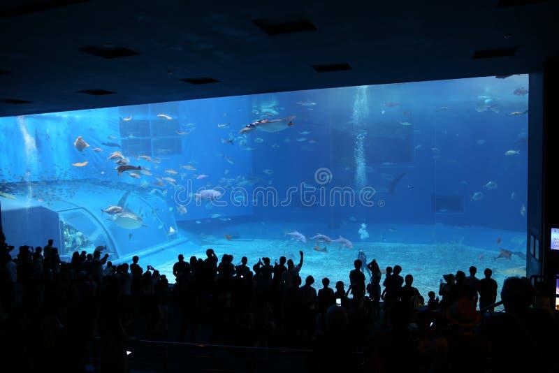 冲绳岛- 10月9日:冲绳岛Churaumi水族馆在冲绳岛, 2016年10月9日的日本 免版税库存照片