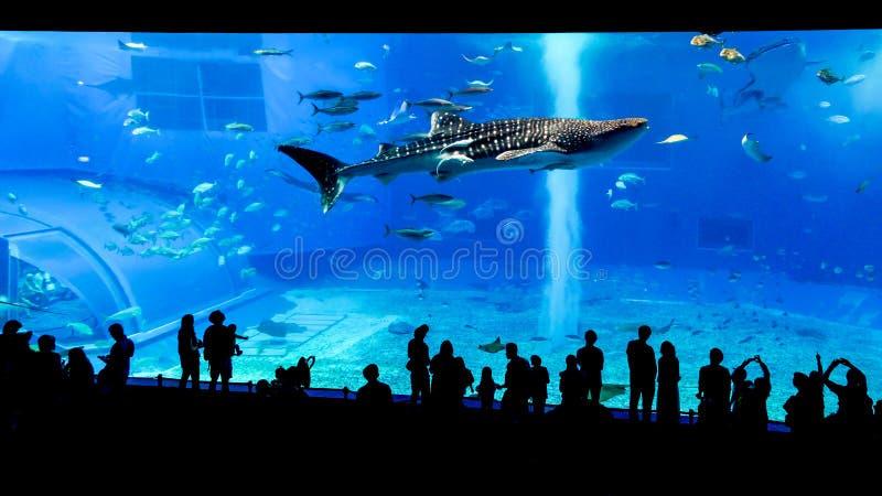 冲绳岛Churaumi水族馆,冲绳岛 免版税库存照片