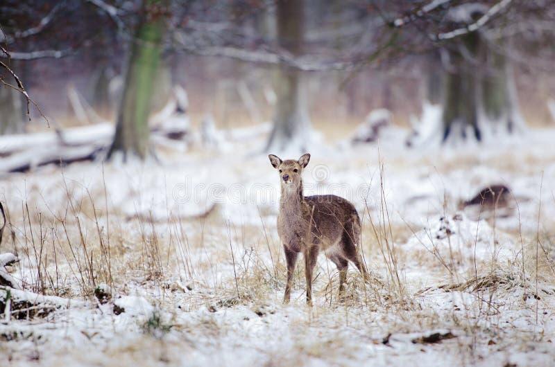 冷冬天 库存照片
