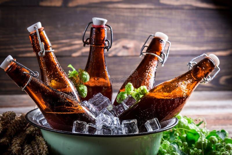 冷和新鲜的萍果汁啤酒 免版税库存图片